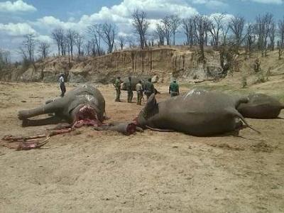 ElephantsKilled